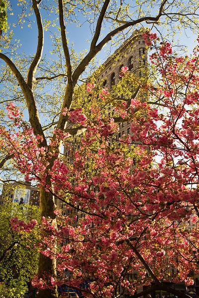 Flatiron Building in spring