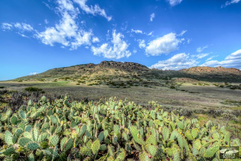 cacti-3.jpg