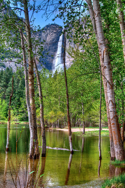 We pulled over at the Yosemite Falls turn-out (on the way into the valley) and there's a little boardwalk you can walk across to see the falls. When the boardwalk ends oyu can walk down to the edge of the river here and I saw some reflections of the trees in the water with Upper Yosemite Falls peaking through -- I couldn't help myself!
