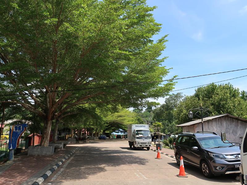 IMG_5187-tree-lined-street.JPG