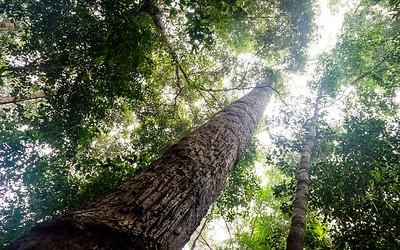 Malaisie - J11 - Taman Negara