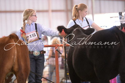 Showmanship - Intermediate