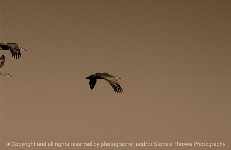 birds-bosque_del_apache_nm-01dec06-3140