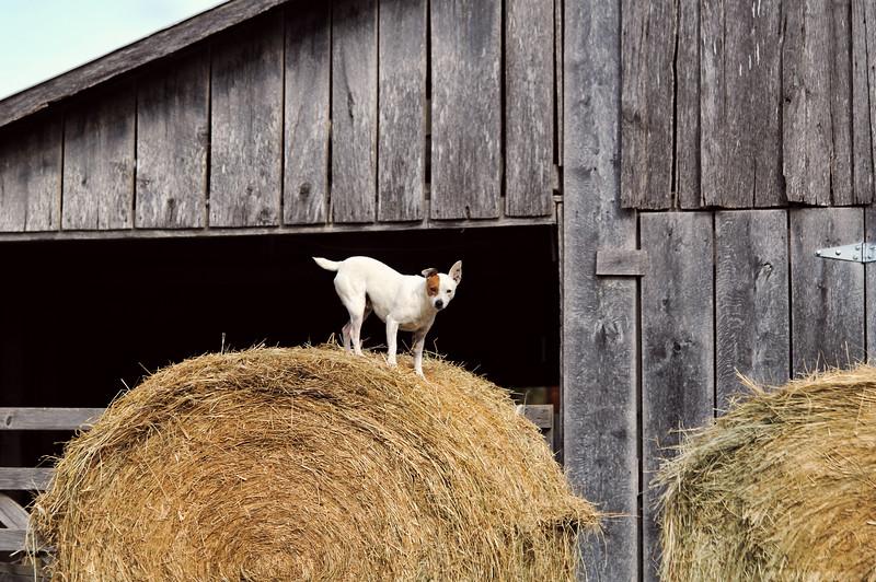 IMG_5897 Huntsville Goat-Dog ps.jpg