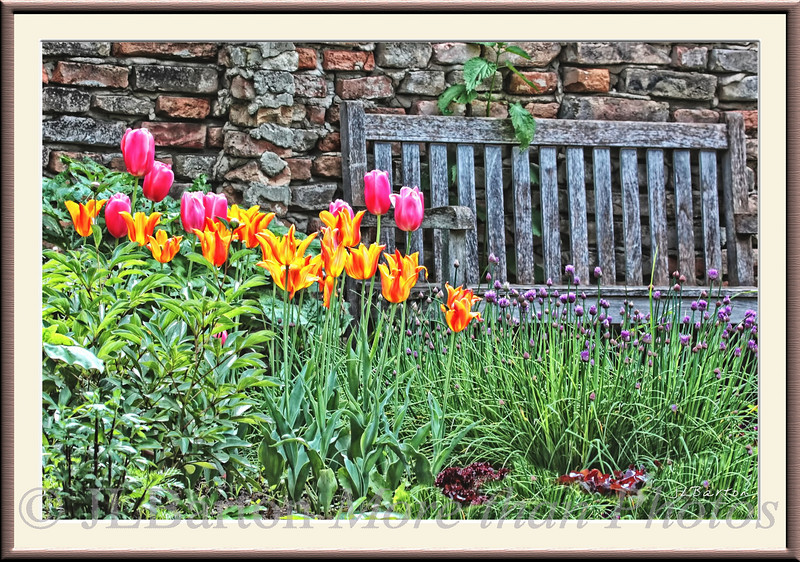 Quiet Corner Tulips and a bench along the wall of a kitchen garden at Schlosshof