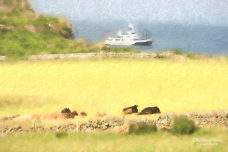 ship n cows 235.jpg