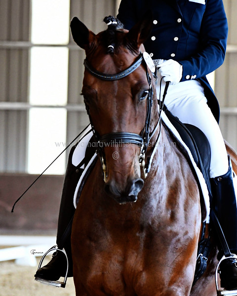 Dressage at the Gaits. July 7-9, 2017