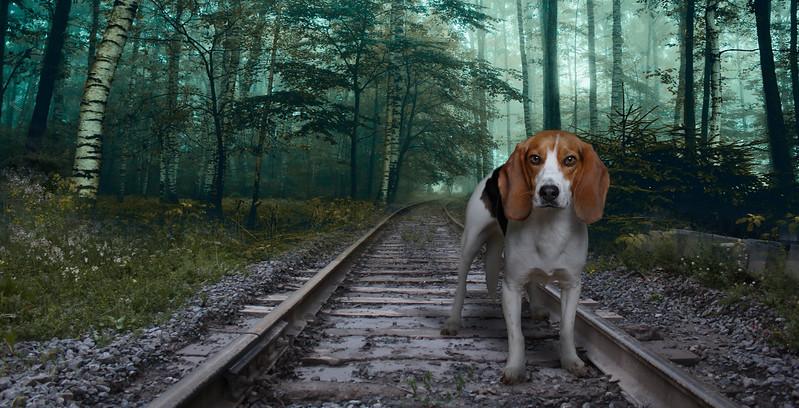 Beagle-3xpz.jpg