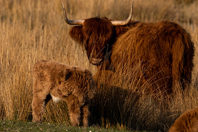 Zeeland - flora and fauna