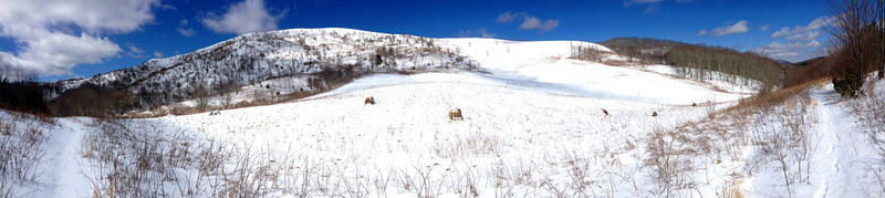Reaching the halfway point, the trail passes the wide field visible from up above.  Though this is Forest Service land, it is still mowed to maintain the open fields visitors have come to expect on Max Patch...