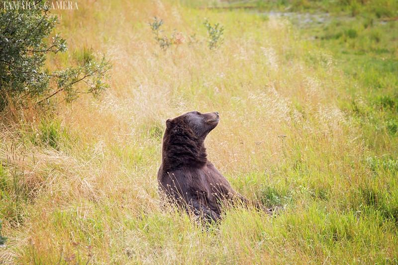 Bear-6-2.jpg