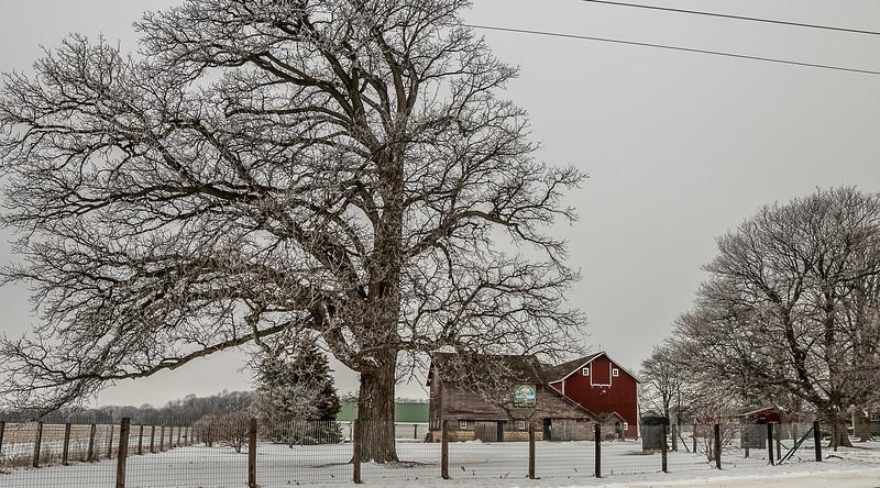stc snow day-9.jpg