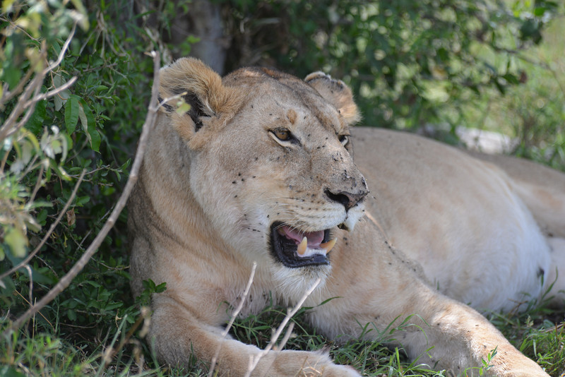East Africa Safari 221.jpg