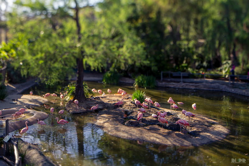 flamingo 001.jpg