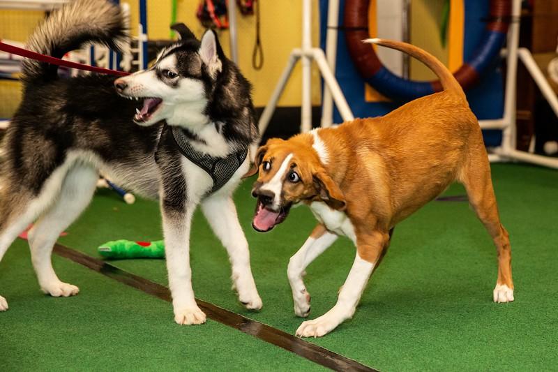 on Command dog Training June 2019-5203.jpg