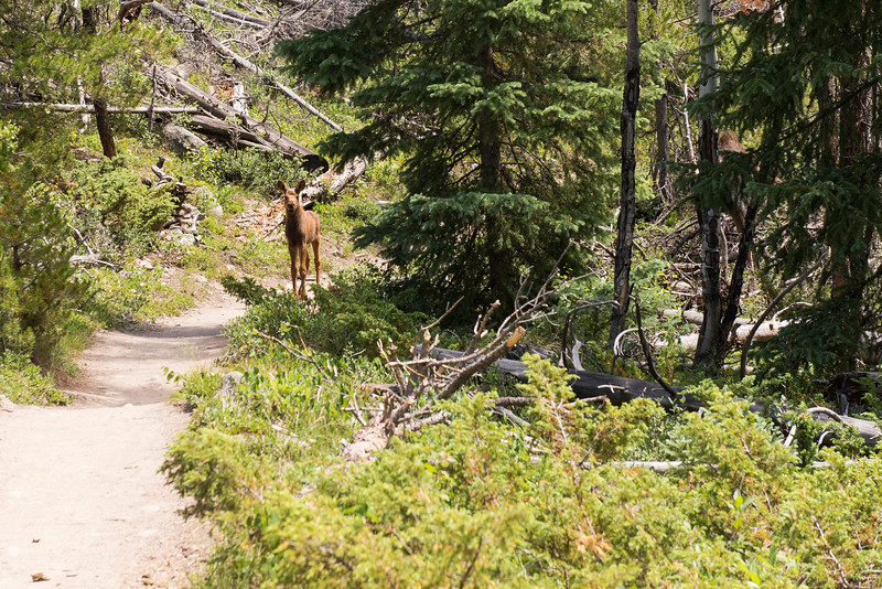 2017-07-08 Day 6 - Cascade Falls Hike and Rocky Mountain National Park 006.jpg