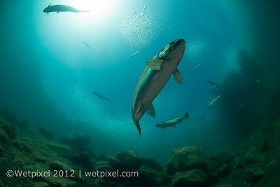 D800 underwater 1-0561