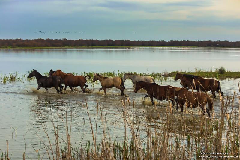 Cosas de las marismas /Things of the marsh