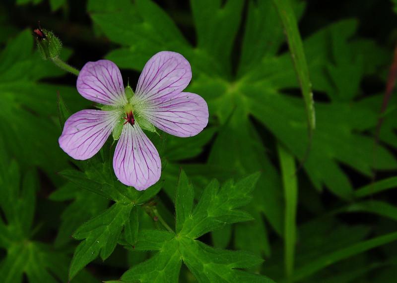 NEA_3019-7x5-Flower-adj.jpg