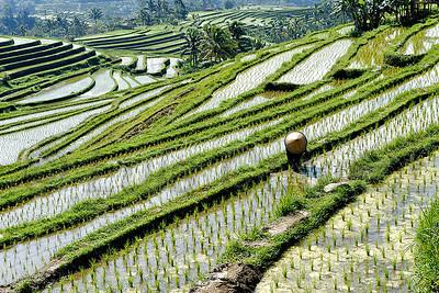 Bali,  © Luis Courtot