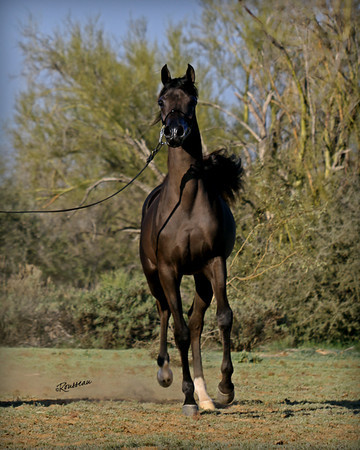 Intencyty Filly SIGNED