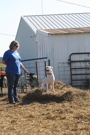 AKC Farm Dog Certificate Test Oct 2016