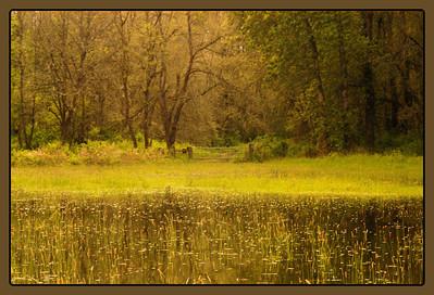 The field - Sauvie Island
