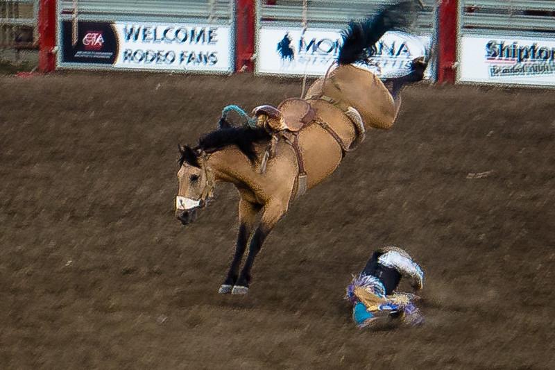 rodeo horse bucking.jpg