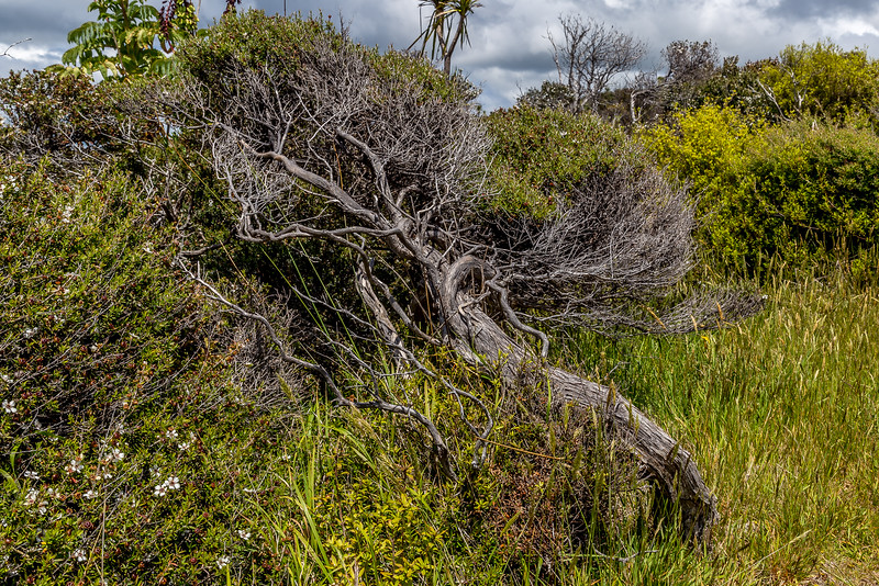Der Wind bestimmt die Richtung des Baumwuchses