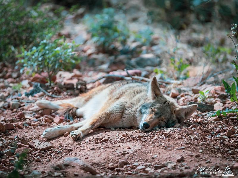 Arizona-Sonora Desert Museum-012.jpg