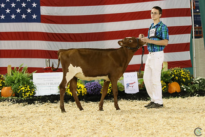 All-American Milking Shorthorn Show 2018