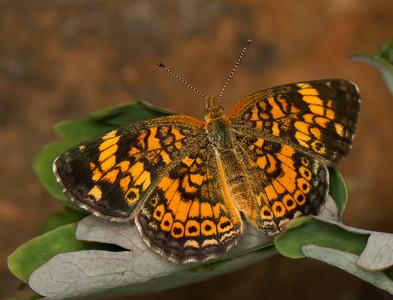 Powell Gardens Butterflies 8-8-2013