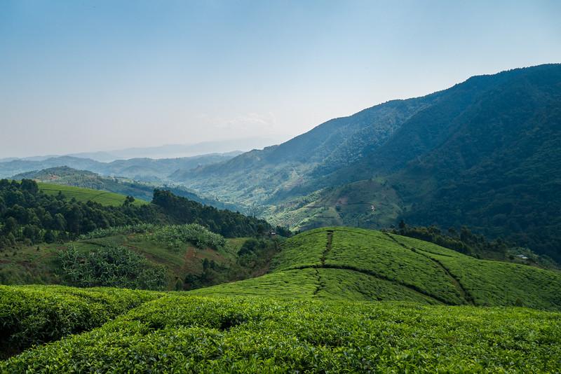 Nyugwe-Rwanda-13.jpg