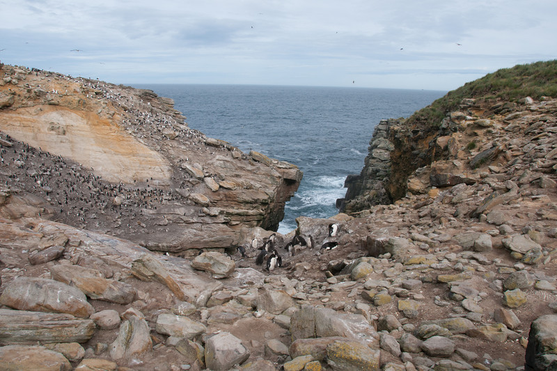 Cliffs in New Island, Falkland Islands
