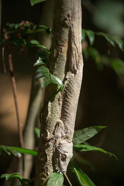 Madagascar_2013_FH0T2626.jpg