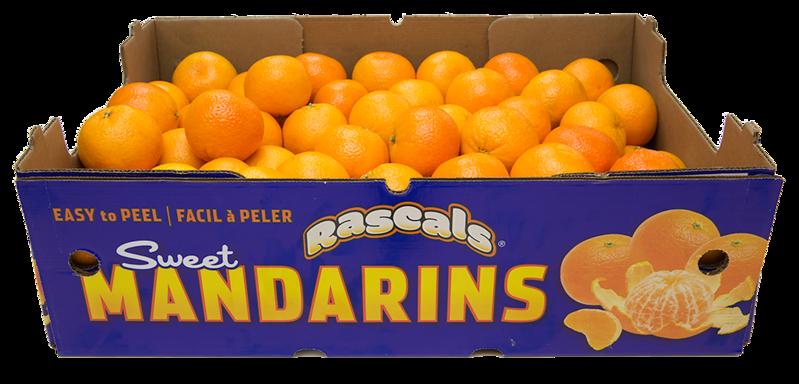 Mandarin Master 33lb