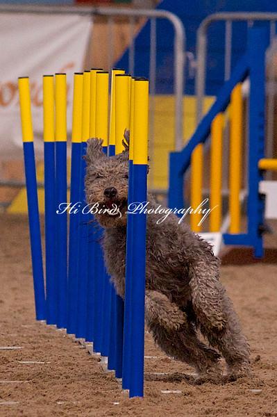 small dog day 2 1196.jpg