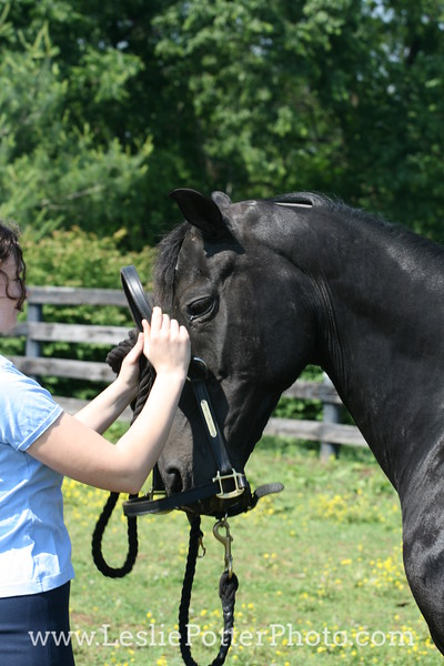 Turning a Horse Out to Pasture