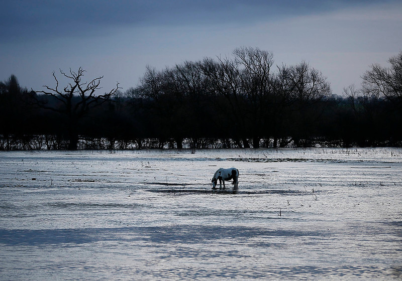 . A horse grazes on a field flooded by water from the River Soar near Quorn, central England on December 23, 2012.   REUTERS/Darren Staples