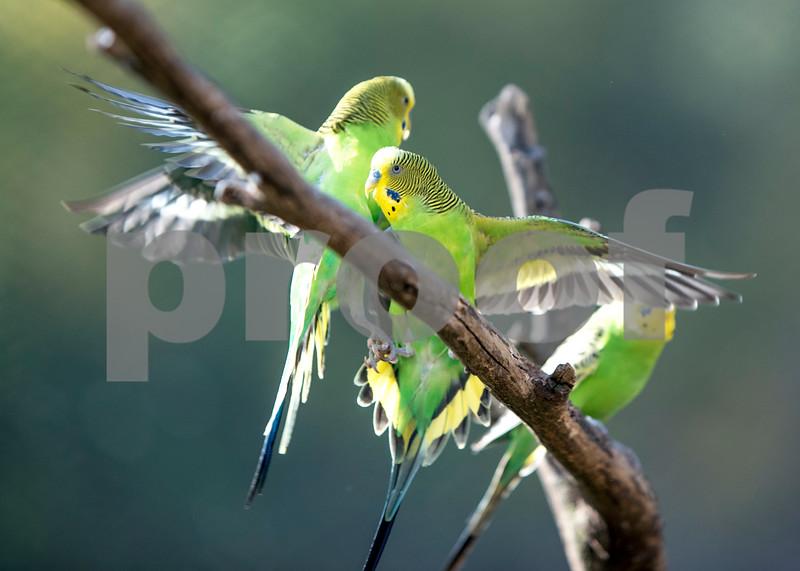 birds 15.jpg