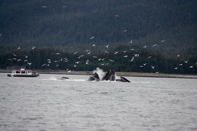 Alaska 2009-322.jpg
