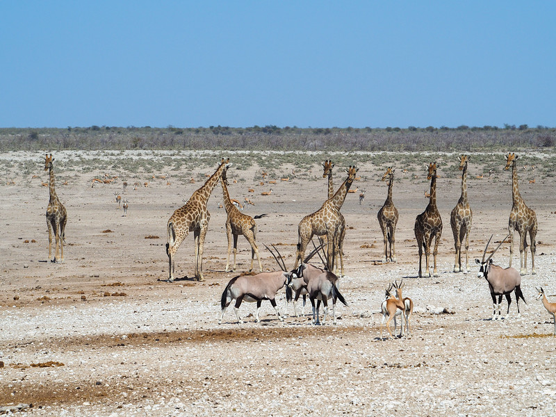 Animals in Etosha National Park in Namibia