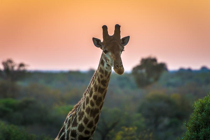 Zuid Afrika 2015 064.jpg