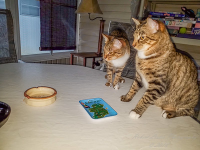 2018-05-25...Cat sitting....Tom and Jerry...Donna S.