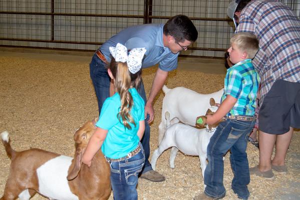 Kellyville Goat Show #2
