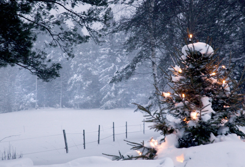 12_Christmas_tree.jpg