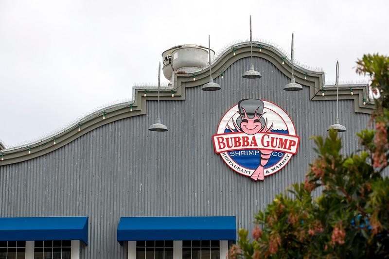 Monterey Aquarium380 copy.jpg