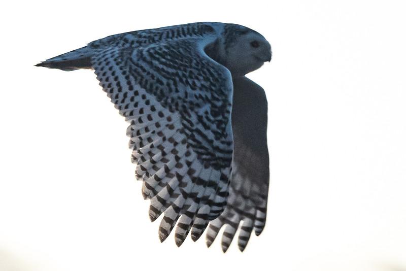 owls-099.jpg