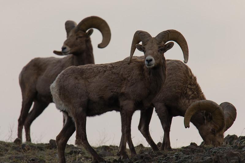 Rams Malaga-49-2.jpg