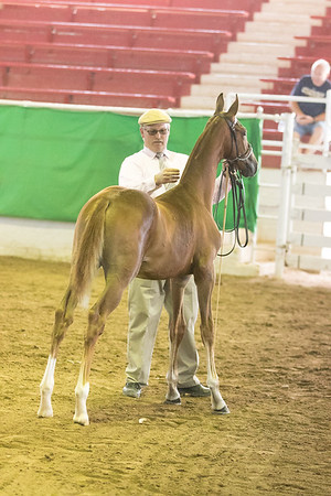 32 - KS Futurity Weanling Colts